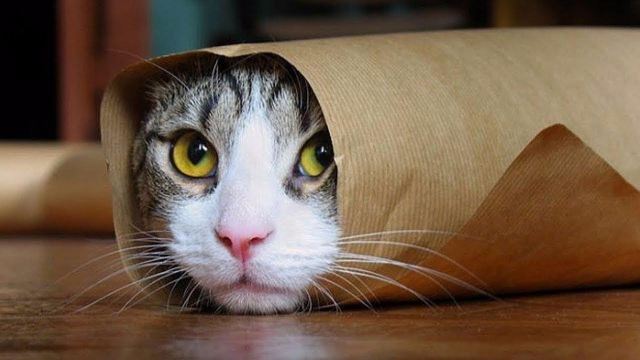 Секретные факты о кошках